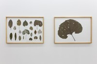 http://www.galeria-sabot.ro/files/gimgs/th-87_Drawings from caterpillars (Herbarium & Burdock leaf), 2015, 100 x 70 cm each.jpg
